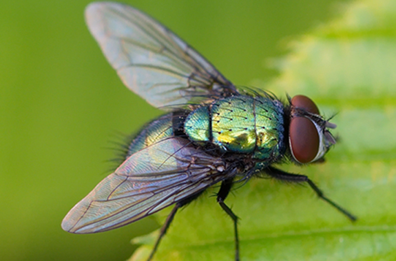 Target areas where flies, live, rest and breed on your property.