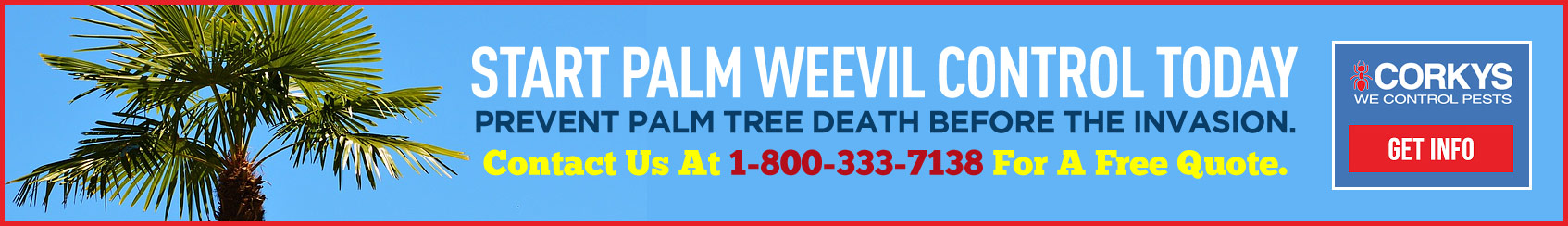 Start Palm Weevil Control Today