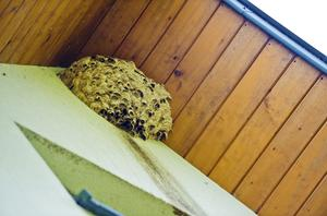 Wasp Nest Prevention