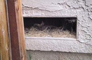 Vent Nest