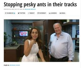 Spotting pesky ants in their tracks - Corky's