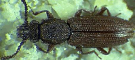 Corky's Pantry Pest Identification