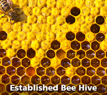 Established Bee Hive