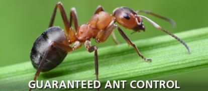 Guarranteed Ant Control