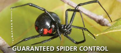 Guarranteed Spider Control