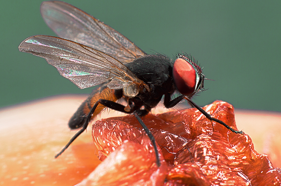 $175 SPECIAL OFFER* Fruit fly service initial treatment