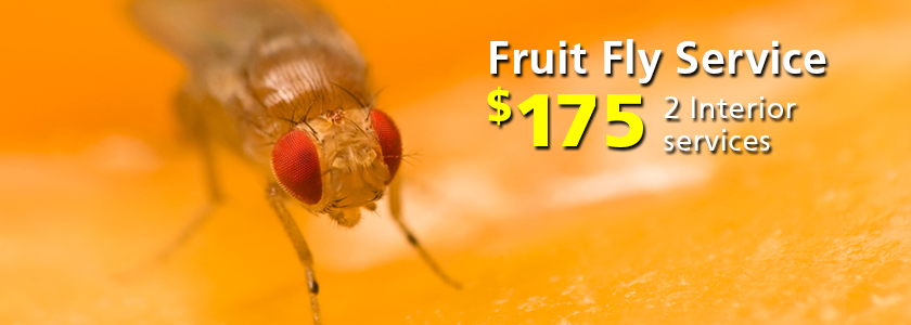 Corky's Fruit Fly Services