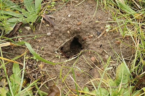 mice san diego