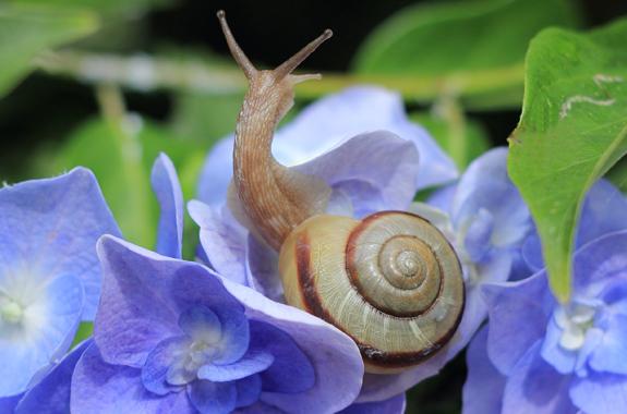 snails san diego