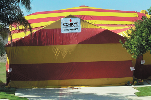 Keep termites out of your home with Corky's