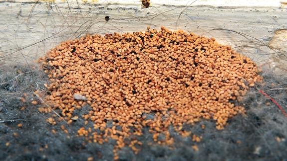 Corky's Termite Subterrannean Termite Treatment