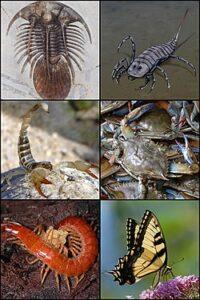 Various Arthropods Wikipedia Commons