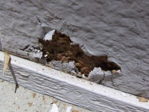 termite-damage-painted-area-bubbled-paint-2