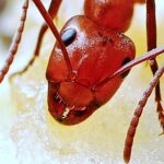 ant-face-with-antennae-564615_640