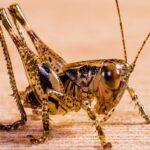 grasshopper-284339_640